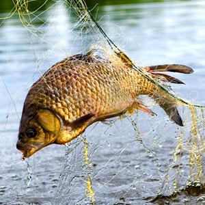 Особенности ловли рыбы в Астрахани