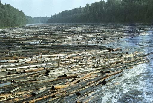 Бревна деревье перегородили течение реки.