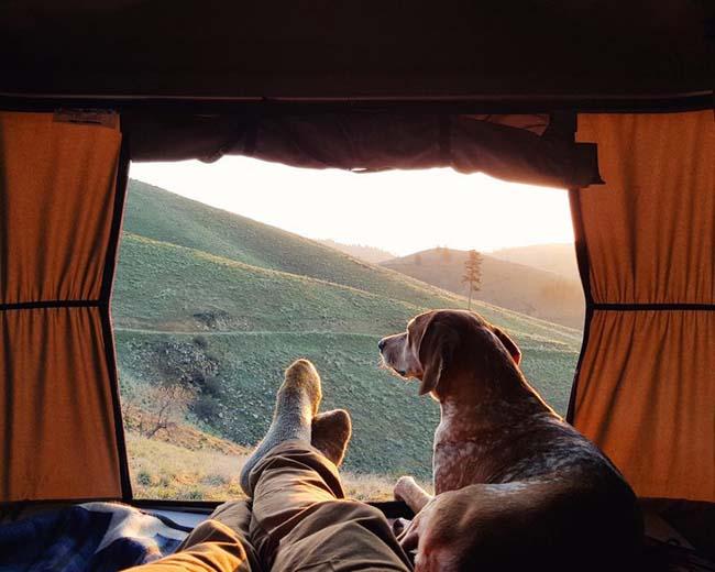 В походе: собака с хозяином в палатке.